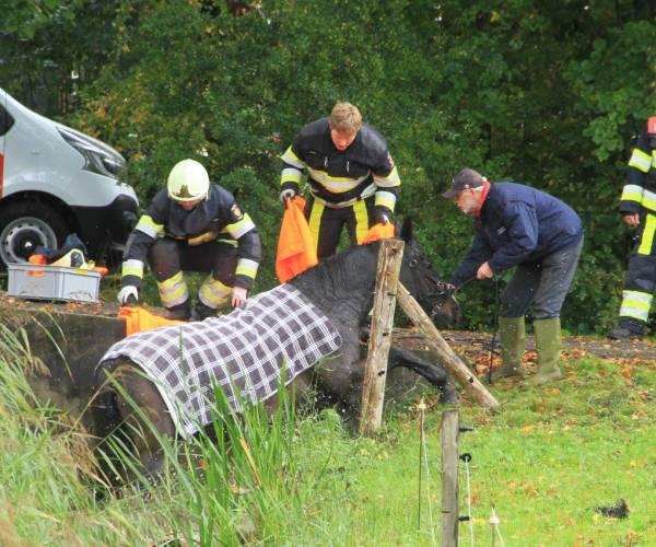 Brandweer haalt paard uit de sloot in Oudehaske