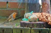 Komend weekend weer Nationale Tuinvogeltelling