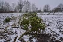LEZERSFOTO'S / Winters donsje in het landschap