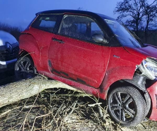 FOTO'S / Grote schade auto's door omgevallen boom