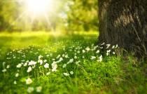 INGEZONDEN / Raadsleden waarschuwen voor oproep favoriete groenplek