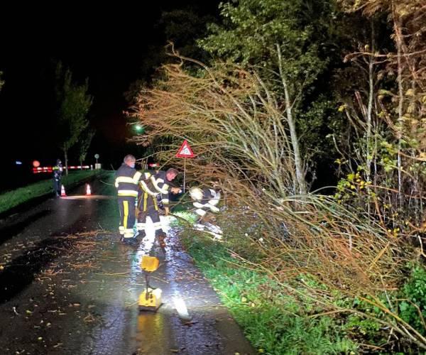 Bomen in Oudehaske waaien om tijdens felle bui met windstoten