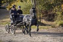 Waarschuwing allergische reactie paarden na bosrit