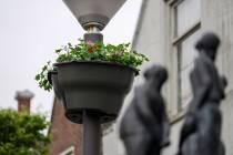 Midstraat Joure opgefleurd met hangende bloembakken